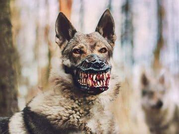 Werewolf Dog Muzzle