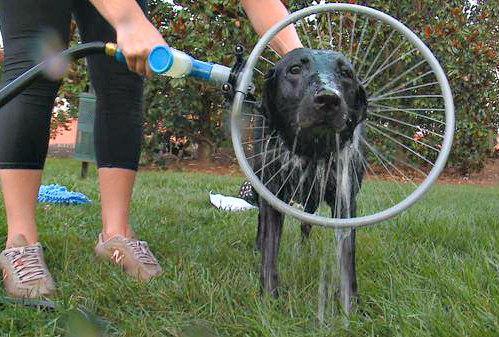 Wearable Dog Shower