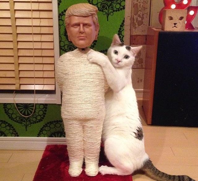 Donald Trump Cat Scratcher Post