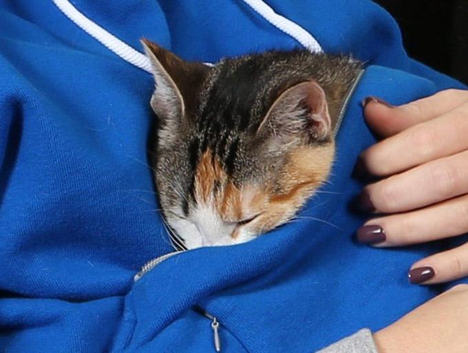Roodie Sleepy Cat Pouch Hoodie