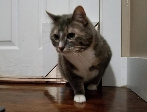 Kitty Korner Cat Door