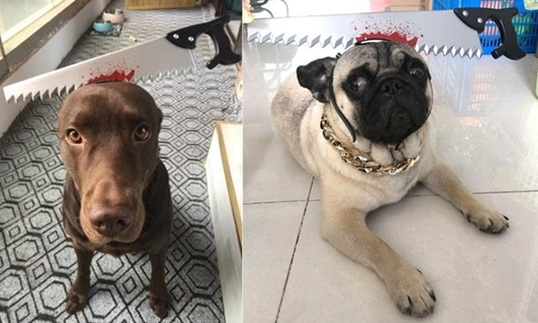 Saw Axe headband for Dogs