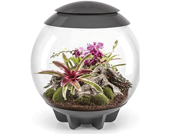 Air terrarium with live plants inside