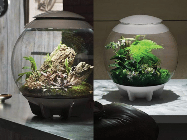 Two different air terrariums with live plants inside them