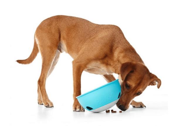 Slow Dog Feeder 1