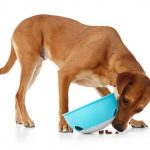 Slow Feeder Dog Bowl 1